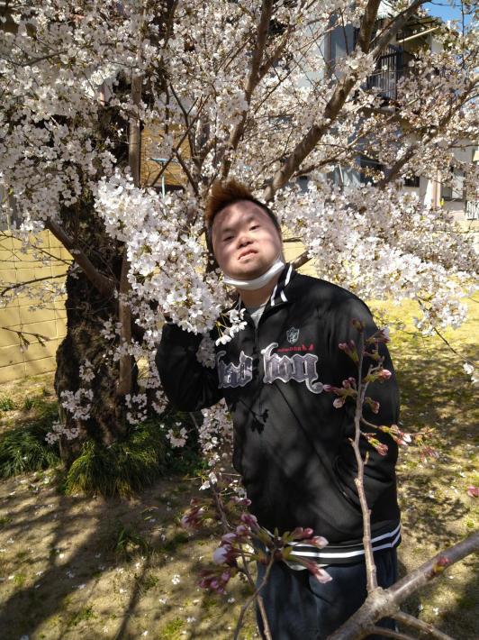 早い桜_d0227066_23352735.jpg