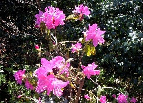 ご近所の公園めぐり、花めぐり_b0102572_10083998.jpg