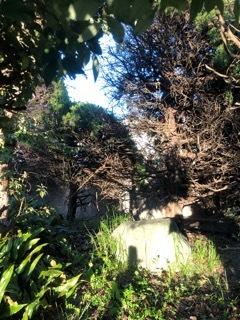 附中歴史探訪 記念碑・記念樹10_d0383872_18055202.jpeg