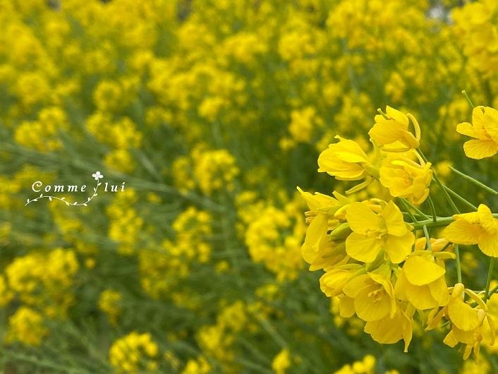お花のチカラ☆_a0192475_14133845.jpg