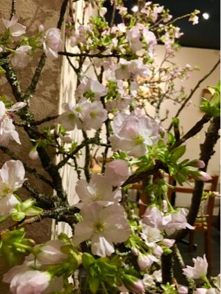 桜_e0025376_02242996.jpg