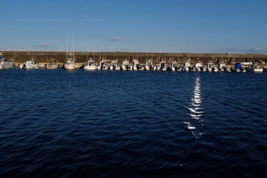 日立漁港 2020・03・24_e0143883_05240779.jpg