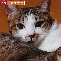 お江戸しあわせ通信!_a0389088_03401015.jpg