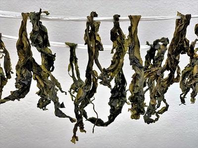 乾燥わかめ と 干し椎茸完成♪ と おうちごはん_d0249193_11064026.jpg