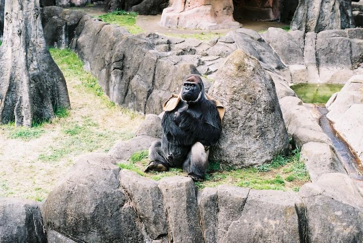 3/9 千葉市動物公園① 5枚_b0016600_23473633.jpg