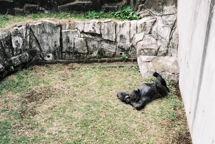 3/9 千葉市動物公園① 5枚_b0016600_23474118.jpg