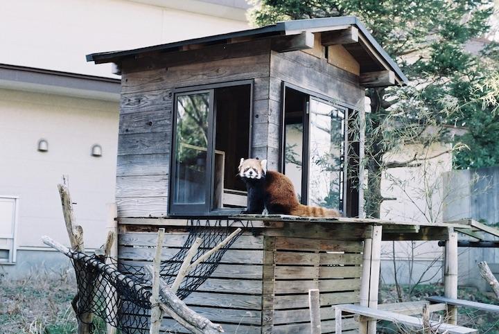 3/9 千葉市動物公園① 5枚_b0016600_23474573.jpg