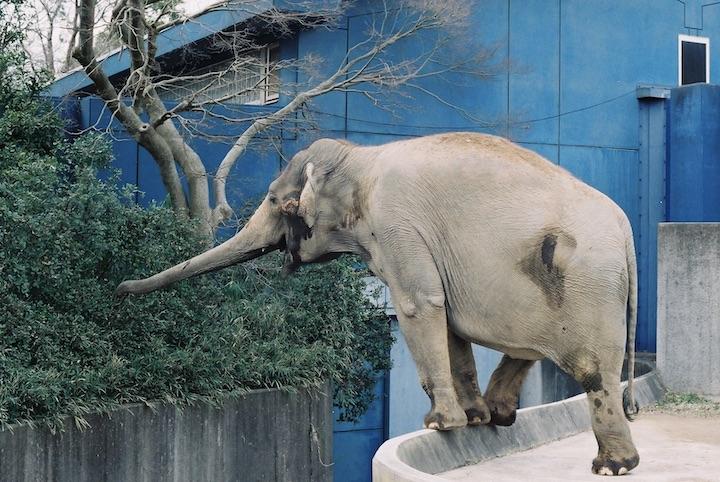 3/9 千葉市動物公園② 6枚_b0016600_23591173.jpg