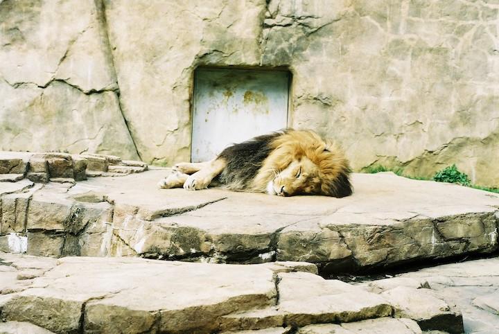 3/9 千葉市動物公園② 6枚_b0016600_2359718.jpg