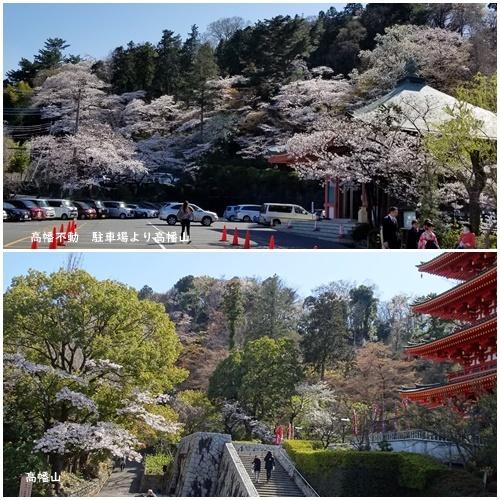お不動さんの桜・庭の花・蘭_c0051105_15551695.jpg