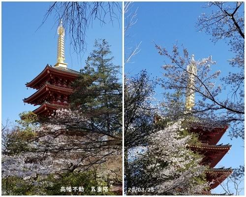お不動さんの桜・庭の花・蘭_c0051105_15555241.jpg