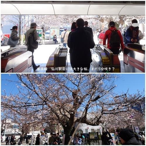 お不動さんの桜・庭の花・蘭_c0051105_16051559.jpg