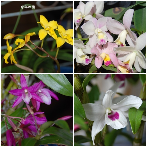お不動さんの桜・庭の花・蘭_c0051105_17173509.jpg