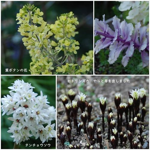 お不動さんの桜・庭の花・蘭_c0051105_17190142.jpg