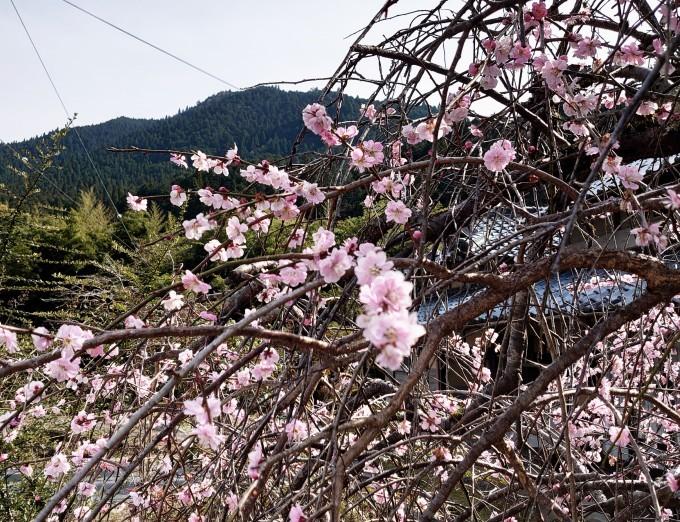 この春大学を卒業、4月から病院で働く山村留学生OBがセンターに_d0265607_19374554.jpg