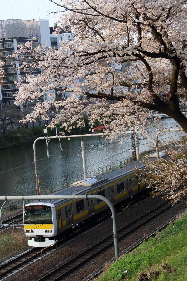 先週末の外濠の桜_b0190710_22094620.jpg