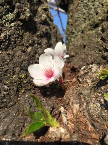 春のよろこび_c0227612_10573535.jpg