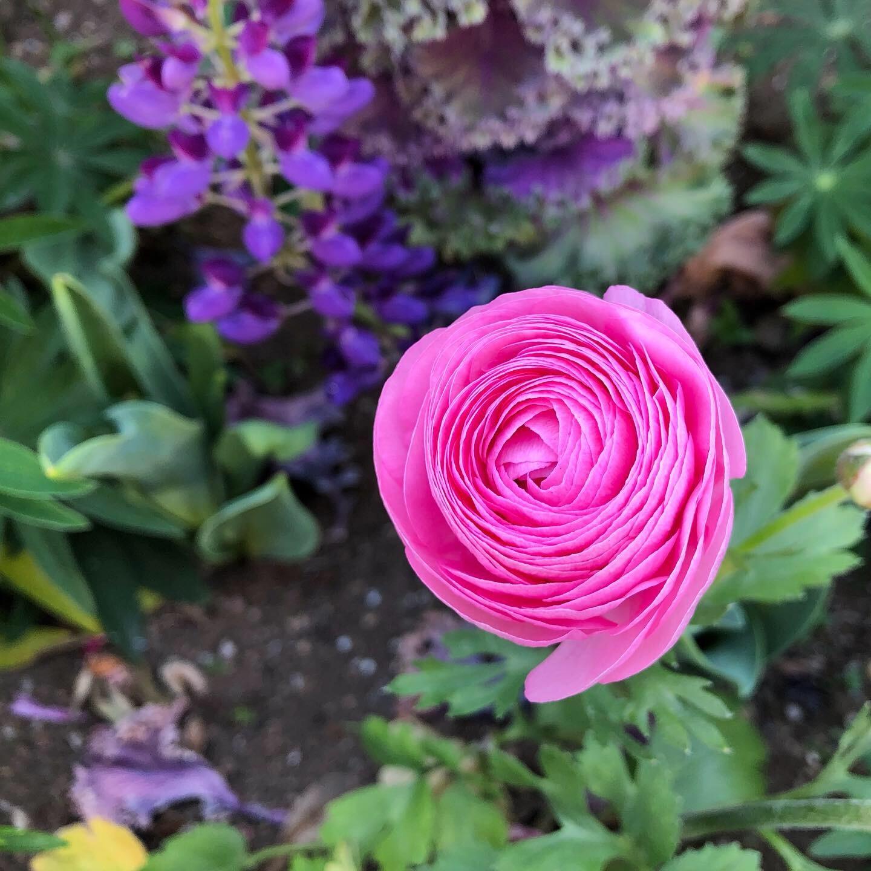 バラの花を何度も試作しています_d0377316_10201342.jpg