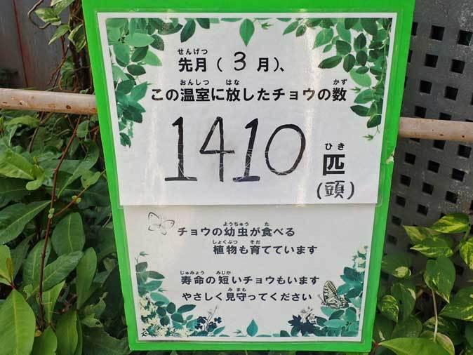 昆虫生態園~蝶の大乱舞!!(多摩動物公園 April 2019)_b0355317_22452514.jpg
