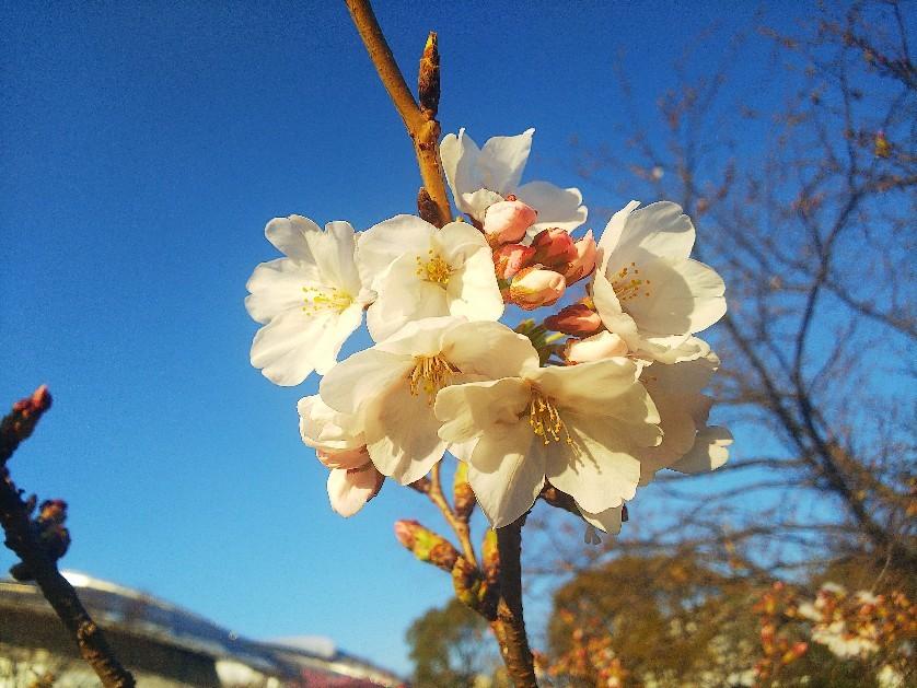 お花見してます🥰_a0098418_10220934.jpg