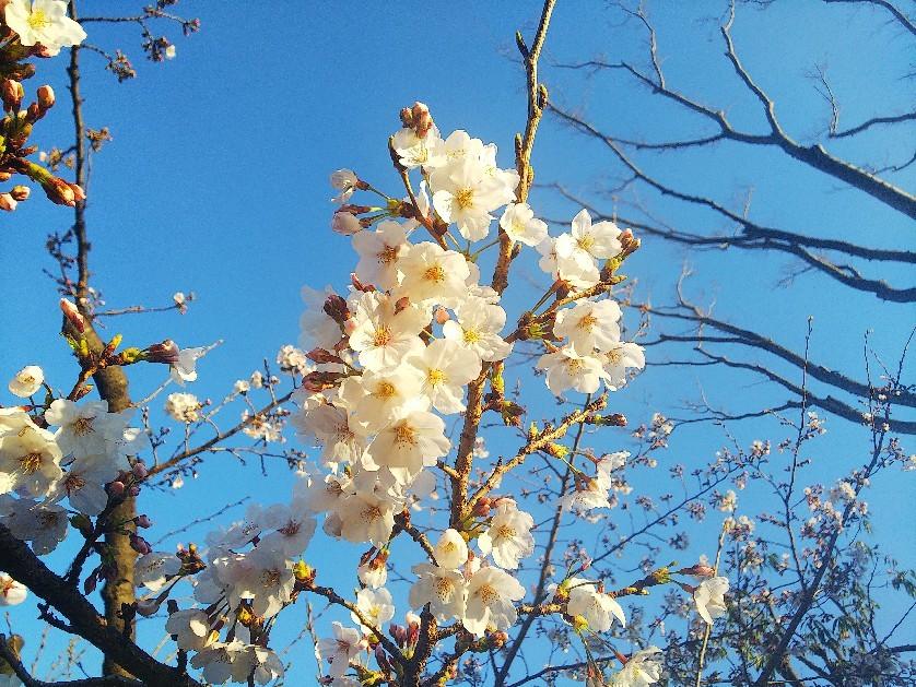 お花見してます🥰_a0098418_10221012.jpg