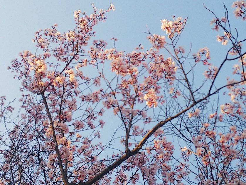 お花見してます🥰_a0098418_10221017.jpg