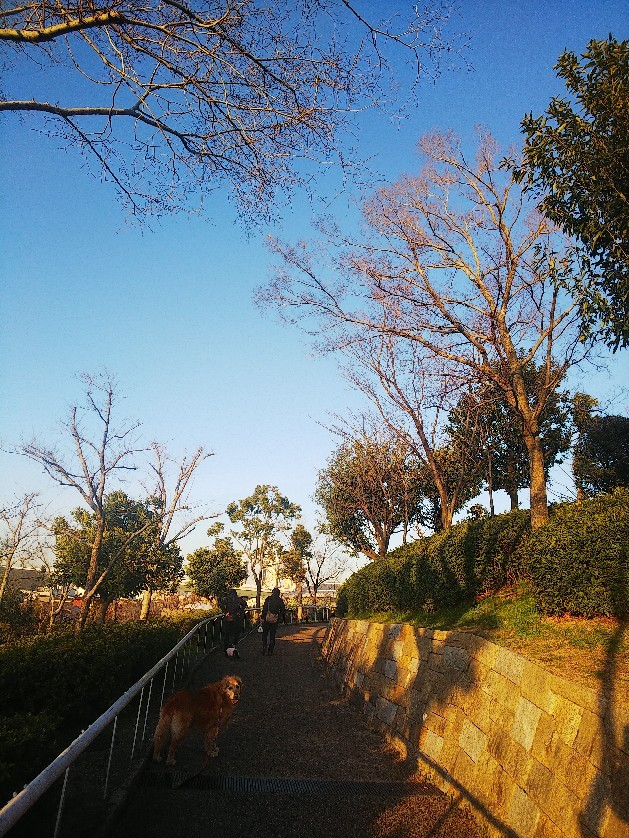 お花見してます🥰_a0098418_10224344.jpg