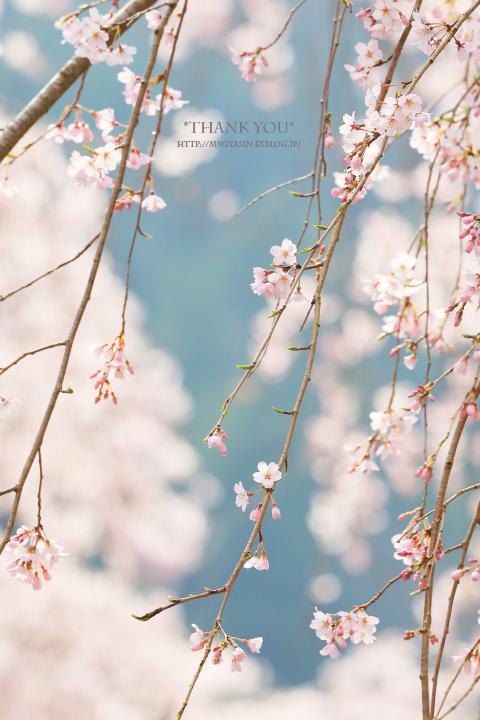 花に酔う_c0211922_01580967.jpg