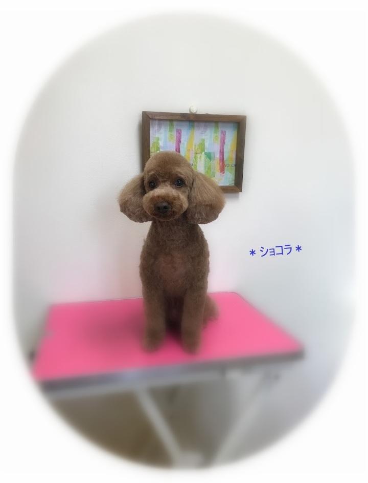 ショコラくん_a0315823_20181462.jpg