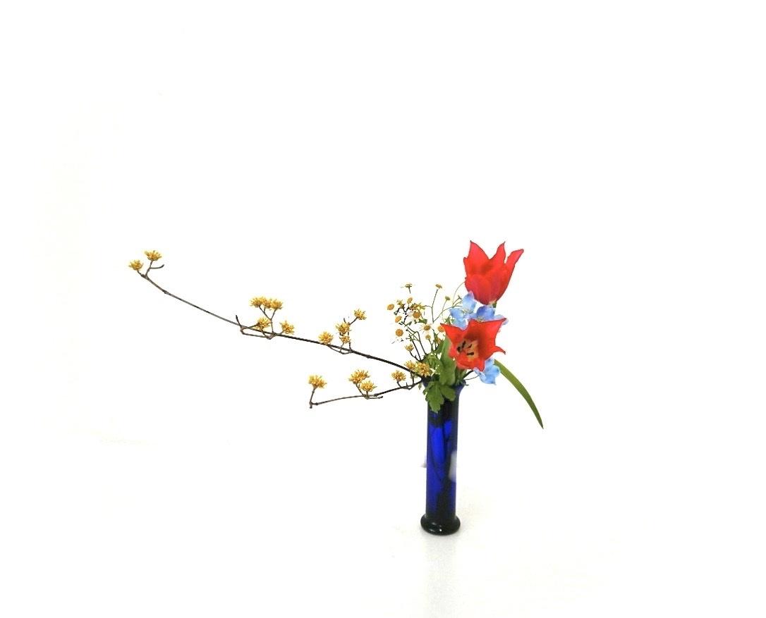 色とりどりの花達_c0165824_17260500.jpg