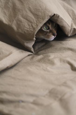[猫的]引き蘢り_e0090124_09032205.jpg