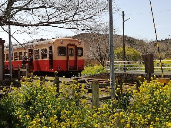 菜の花と小湊鉄道_b0129725_15312260.jpg