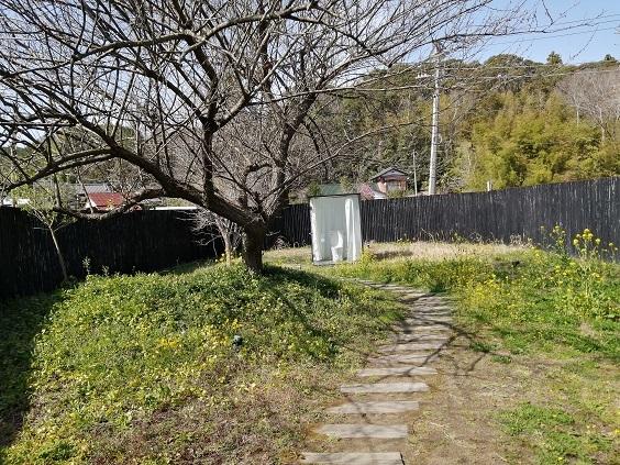 菜の花と小湊鉄道_b0129725_15362524.jpg