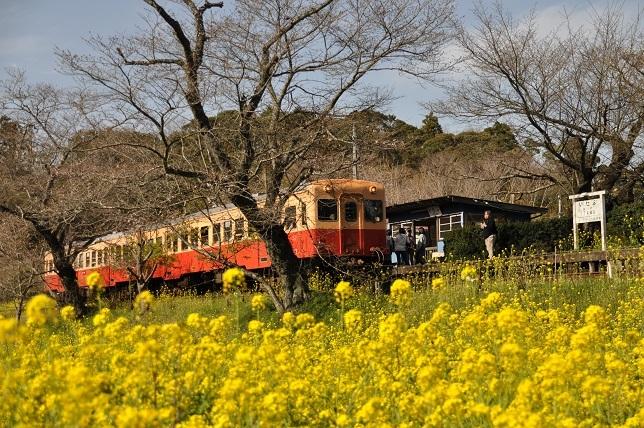 菜の花と小湊鉄道_b0129725_15491444.jpg