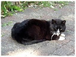 地域猫は元気、元気!_d0221430_17425126.jpg