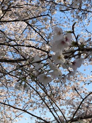 今日のお散歩_e0162132_20382946.jpg