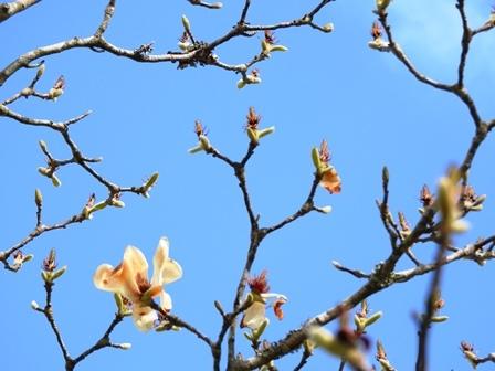 花も果実も_a0123836_15055383.jpg