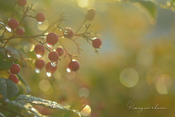 早く目覚めた春の妖精_b0197639_16165160.jpg