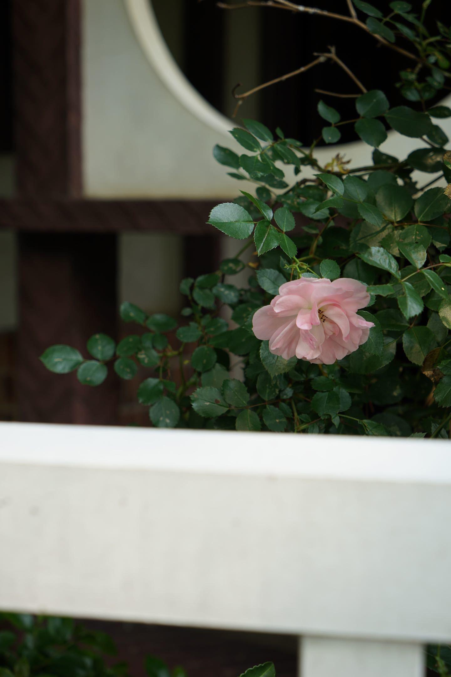 江戸東京たてもの園 35_b0360240_22211397.jpg