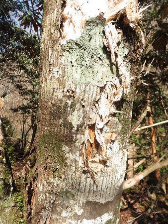 ツキノワグマ生息域と水晶転がる山域を散策 【奈良県・台高】3/21_d0387443_10161726.jpg