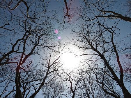 ツキノワグマ生息域と水晶転がる山域を散策 【奈良県・台高】3/21_d0387443_10162225.jpg