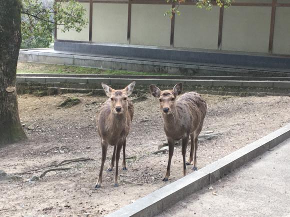 鹿さんの記録_b0405445_21310005.jpg