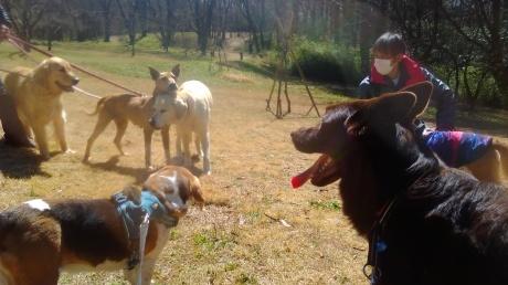 しわしわーずの母犬くるみのお預かりさん、緊急募集しています!_c0372561_01050268.jpg