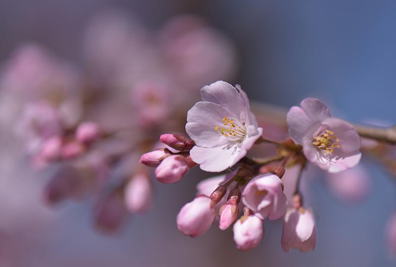 2020年 春_e0164563_09373200.jpg
