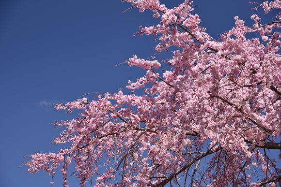 2020年 春_e0164563_09373299.jpg