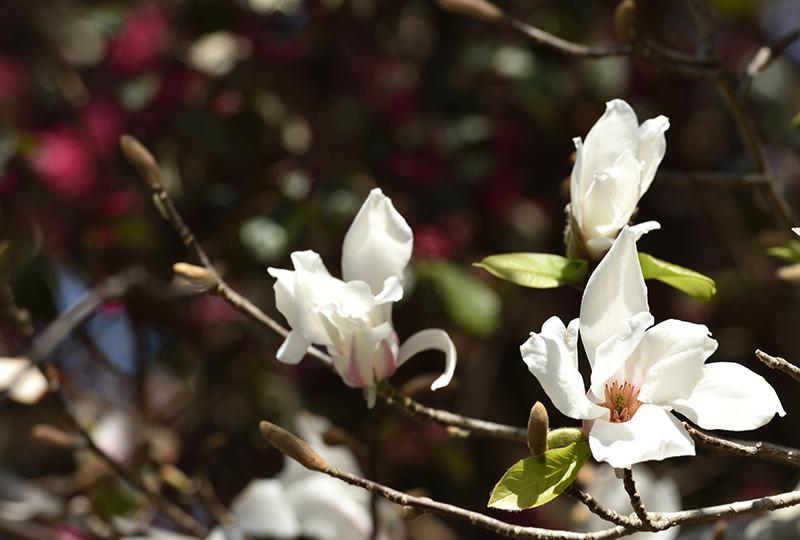 2020年 春_e0164563_09383617.jpg