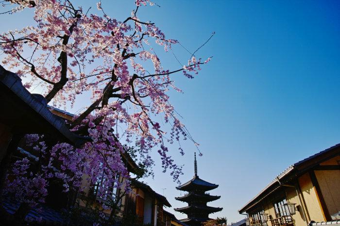 桜 2020_f0021869_00130295.jpg