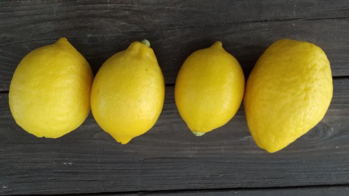 Lemon_b0339572_11135107.jpg