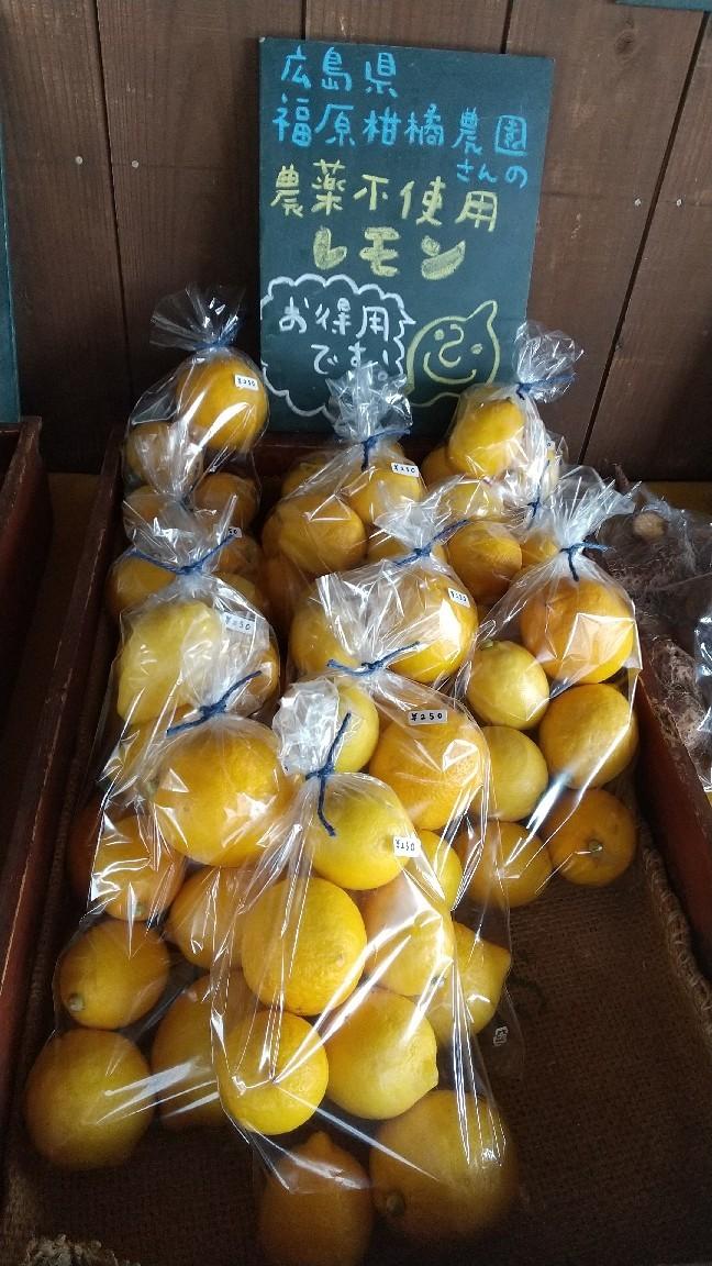 Lemon_b0339572_11135165.jpg