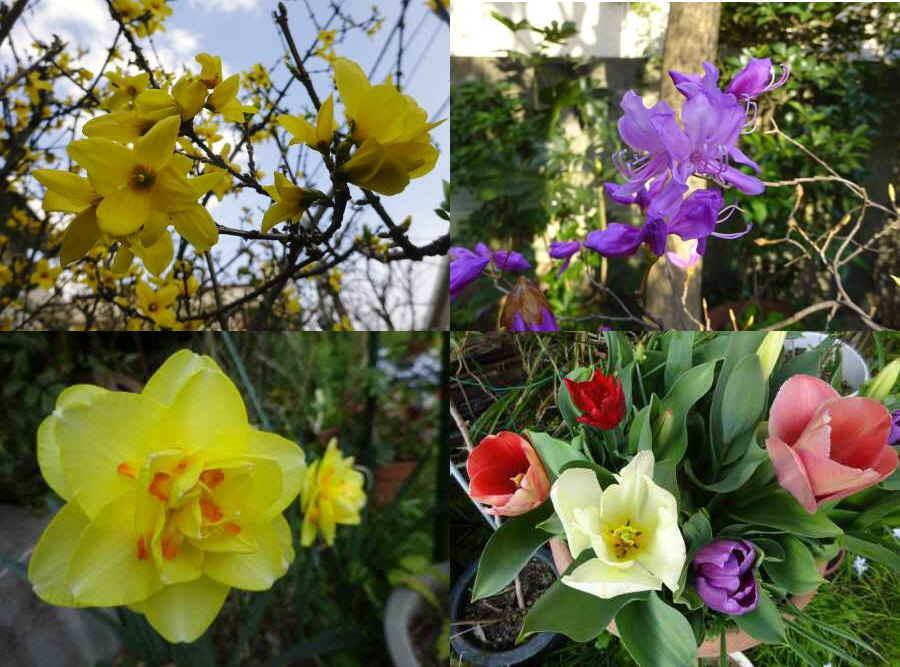 庭の花 春その2_f0059673_10293541.jpg